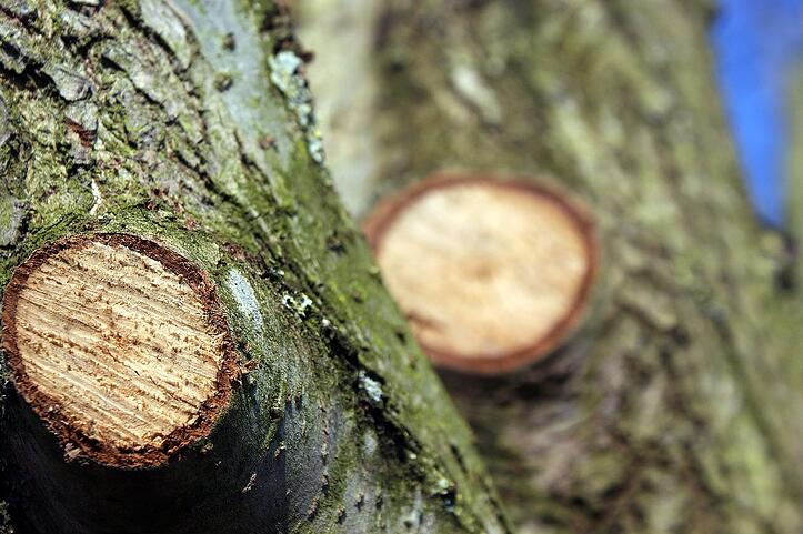 what does tree trimming cost