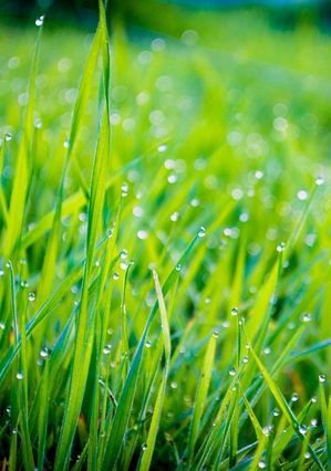 Lawn aeration stimulates roots to grow more deeply, which supports healthier, more vigorous turf growth.