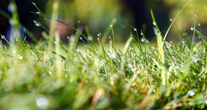 grass-498628_1280.jpg