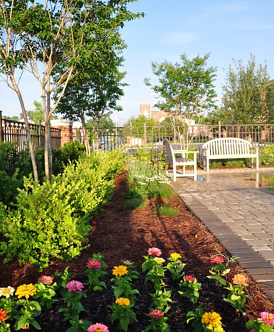 native plantings and mulch are two commercial landscaping ideas used to reduce water use