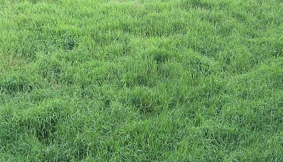 How To Get Rid Of Bahia Grass In Warm Or Cool Seasons