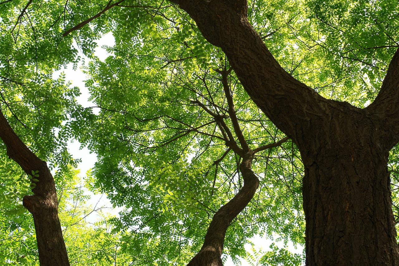 trees-830690_1280.jpg